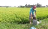Hướng dẫn nông dân xử lý bao bì thuốc bảo vệ thực vật