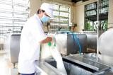 Khuyến khích nuôi bò sữa theo quy mô trang trại, liên kết để phát triển bền vững