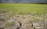 Chính phủ hỗ trợ 2.040 tỷ để chống hạn hán, xâm nhập mặn