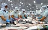 VASEP cảnh báo thận trọng hơn khi xuất khẩu cá tra sang Trung Quốc