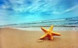 Con sóng yêu thương