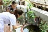 Phòng chống virus Zika: Chưa hạn chế đi lại giữa các địa phương