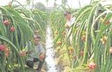 Chương trình phối hợp tạo thêm nhiều cơ hội cho phát triển nông nghiệp