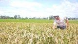 Nông dân khốn khổ vì khó kiểm soát chất lượng vật tư nông nghiệp