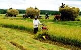 Nông nghiệp 'khát' vốn, ngân hàng vẫn 'né' cho vay