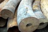 Bắt giữ 309kg ngà động vật tại sân bay quốc tế Nội Bài