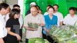 Thủ tướng thăm Dự án nông nghiệp công nghệ cao VinEco Hải Phòng