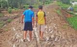 Bình Hòa Tây: Đơn vị thi công sẽ rải đá ngay sau khi trời hết mưa