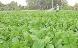 Để nông dân sản xuất hiệu quả