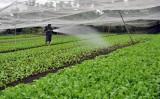 Cần chính sách đột phá để nông dân sản xuất nông sản sạch