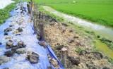 Bảo vệ lúa Đông Xuân sớm trước tình hình mưa, lũ
