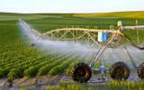 Liên kết để phát triển nông nghiệp và cùng…thắng