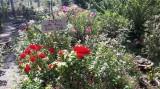 """Nhân rộng mô hình """"Vườn hoa trước ngõ"""""""