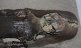 Chile tìm kiếm sự hỗ trợ để bảo tồn các xác ướp cổ nhất thế giới