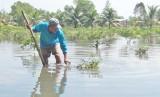 Nông dân trồng chanh thiệt hại nặng vì lũ