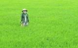 Mộc Hóa triển khai xây dựng 5.575ha lúa chuyên canh chất lượng cao