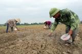 Quốc hội ủng hộ mở rộng diện miễn thuế sử dụng đất nông nghiệp