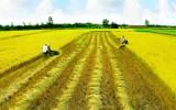 Nông dân được giao đất nông nghiệp nhưng không sử dụng sẽ bị đánh thuế