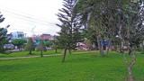 Di dời cây Trúc Đào khỏi công viên Hoàng Hoa Thám – TP.Tân An