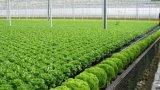 Nông nghiệp hữu cơ - thiếu chính sách khó phát triển