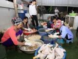 Cảnh báo nguy cơ lây lan dịch bệnh trên vật nuôi dịp Tết Nguyên đán