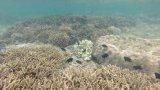 Vẻ đẹp thiên nhiên của Khu bảo tồn biển Hòn Cau