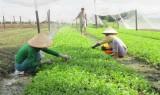 Phát triển nông nghiệp sạch, hạn chế ô nhiễm môi trường