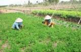Năm 2016: Cần Giuộc có 9.300 nông dân sản xuất kinh doanh giỏi