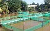 Nông dân thành công với việc nuôi thủy sản