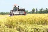 Đức Hòa: Các cây trồng chủ lực giảm về diện tích và năng suất