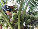 Quỹ Nông nghiệp quốc tế chia sẻ chuỗi giá trị dừa Bến Tre tại Italy