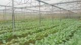Long An: Quy hoạch vùng nông nghiệp ứng dụng công nghệ cao huyện Cần Giuộc
