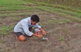 Người trồng đậu phộng khổ vì mưa