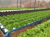Chuyển hóa giấc mơ nông sản sạch cho người tiêu dùng Việt