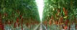 Dồn dập thiên tai và sự cố - nông nghiệp vẫn tạo dấu ấn khởi sắc