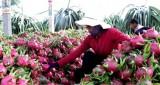 Rau quả Việt: Điểm sáng ấn tượng trên bức tranh xuất khẩu nông sản