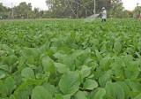 Năm 2017: Ngành Nông nghiệp Long An phấn đấu đạt chỉ tiêu tăng trưởng 1,5%