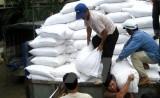 Hỗ trợ hơn 10.400 tấn gạo cho 12 địa phương dịp Tết Nguyên đán