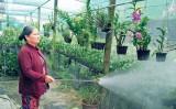 Nhà vườn  lo tết