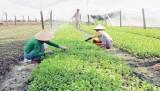 Nông nghiệp ứng dụng công nghệ cao: Bước đi phù hợp