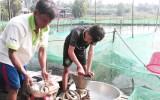 Để nông dân Đồng Tháp Mười được hỗ trợ từ chương trình phát triển nuôi thủy sản