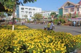 Nhộn nhịp chợ hoa xuân Kiến Tường