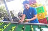Thanh niên nông dân chế tạo máy rửa chanh