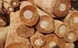 Việt Nam đứng trước nguy cơ thiếu gỗ nguyên liệu
