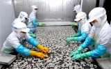 Australia cấm nhập khẩu tôm - Doanh nghiệp Việt thiệt hại nặng