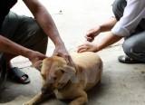 Việt Nam khống chế và tiến tới loại trừ bệnh dại vào năm 2021