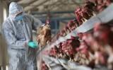 Trung Quốc phát hiện biến chủng của cúm gia cầm H7N9