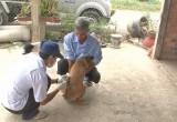 Bến Lức: Ra quân tiêm phòng dại cho vật nuôi gia đình