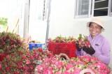 Long An xúc tiến tiêu thụ hàng nông sản với Saigon Co.op và Satra