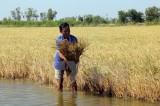 Hạn mặn giảm, mưa trái mùa kéo dài trong mùa khô Nam Bộ